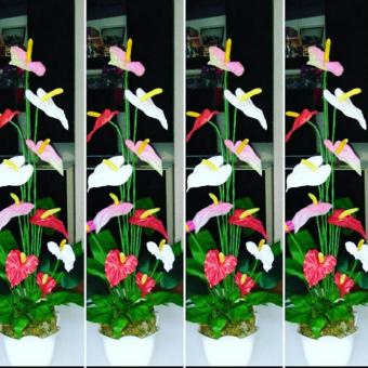 ANTORYUM- Saksı Çiçek
